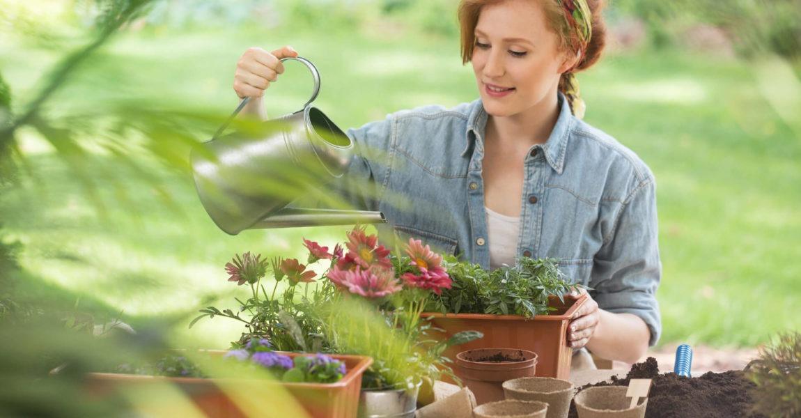Quando, quanto e come dare da bere alle piante di casa