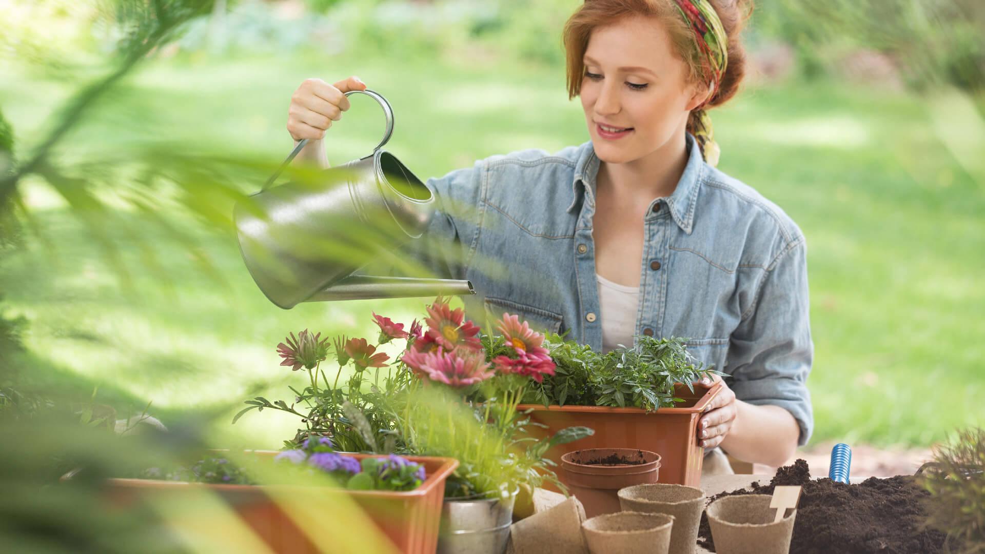 Bagnare Piante Con Bottiglie quando, quanto e come dare da bere alle piante di casa